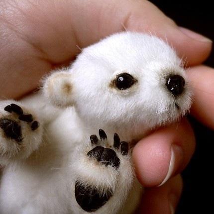 Белый меджвежонок