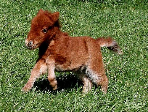 Малыш-пони
