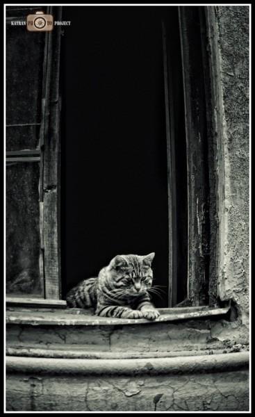 Кот на ступенях