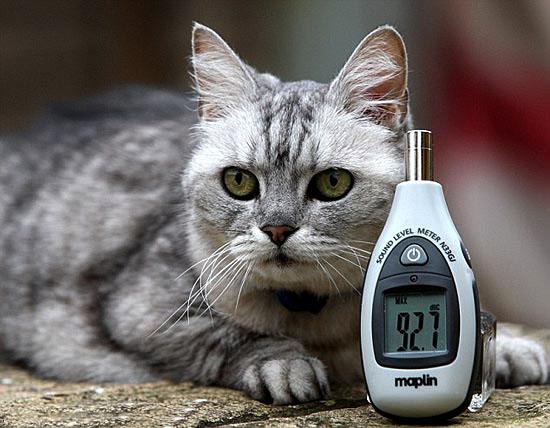 Кошка Смоки