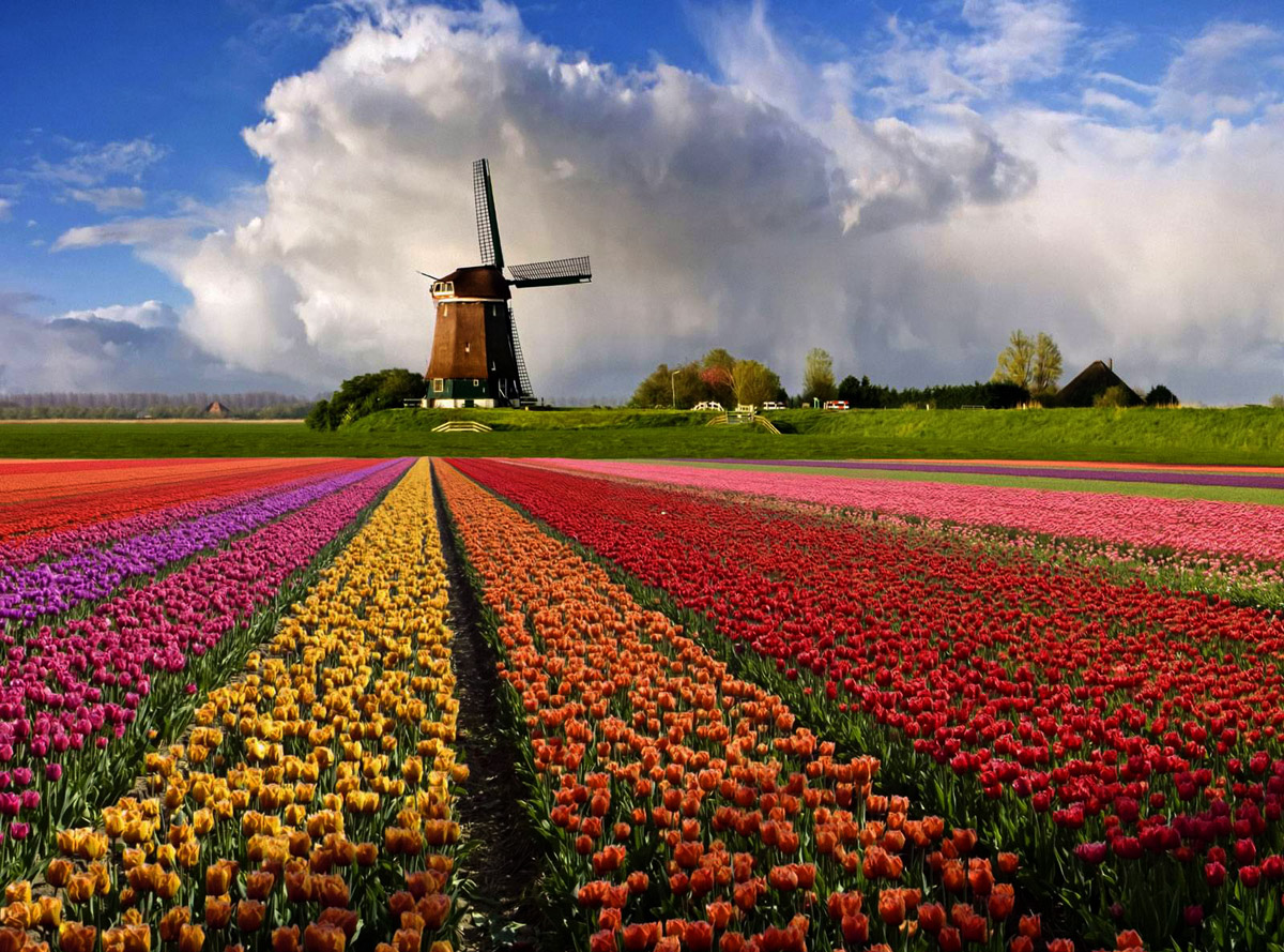 Голландия и цветы фото