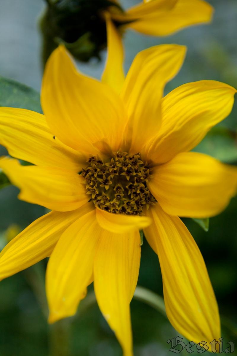 Летние цветы | На досуге... гвен стефани