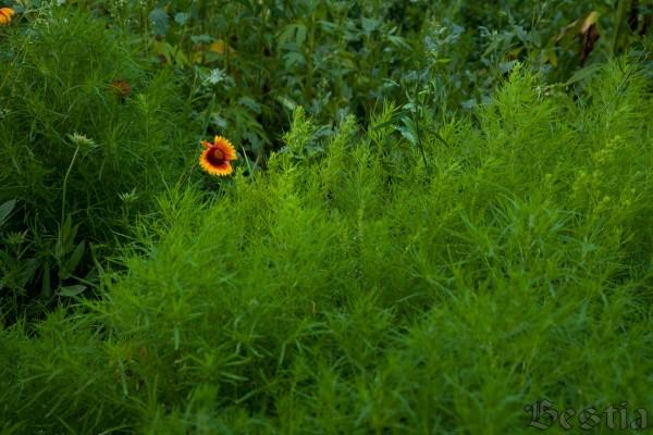 Цветок среди зелени