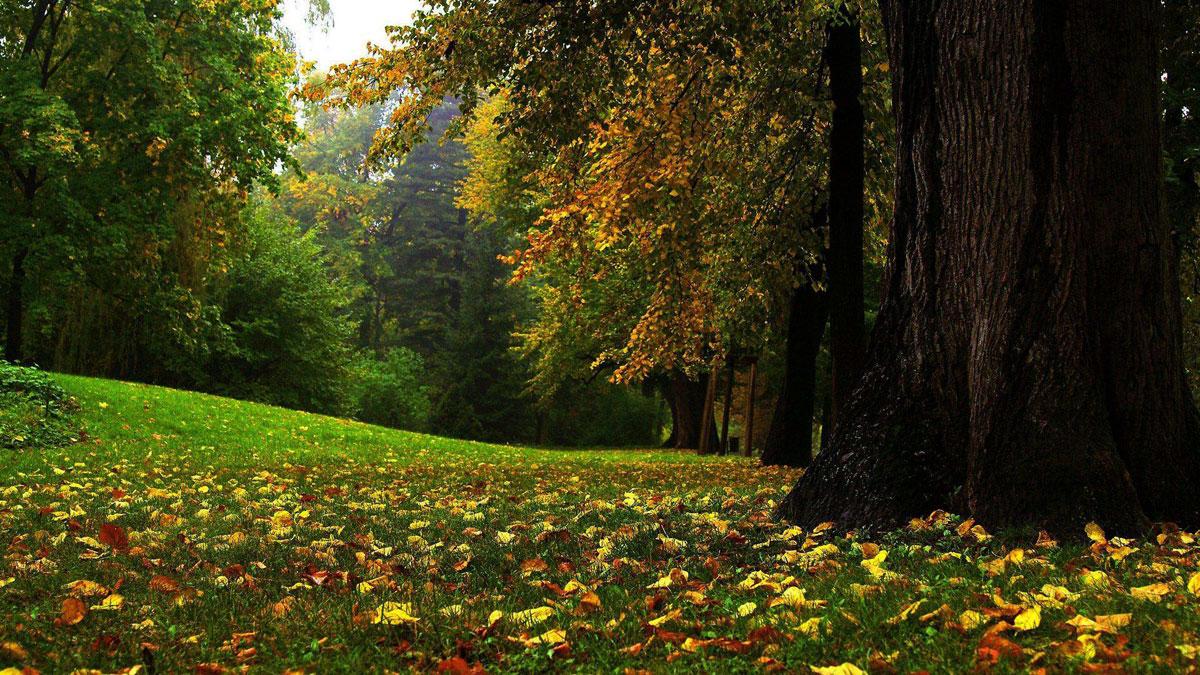 Красивые картинки природы 41 фото  Прикольные картинки