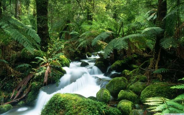 Тропические леса
