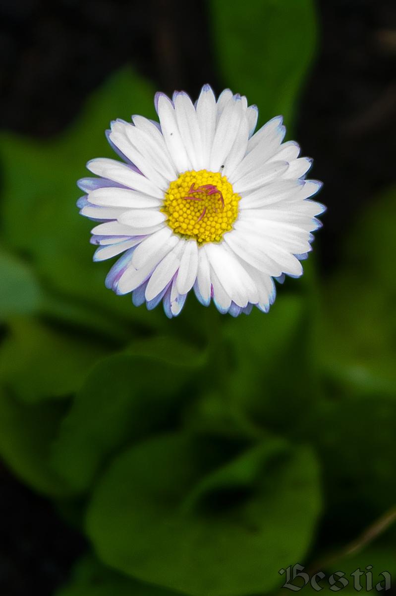 Неординарные цветы
