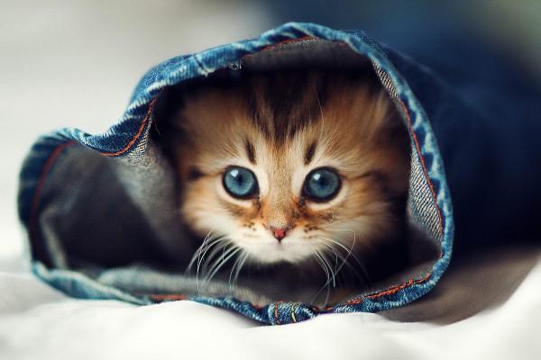 Кот в джинсах