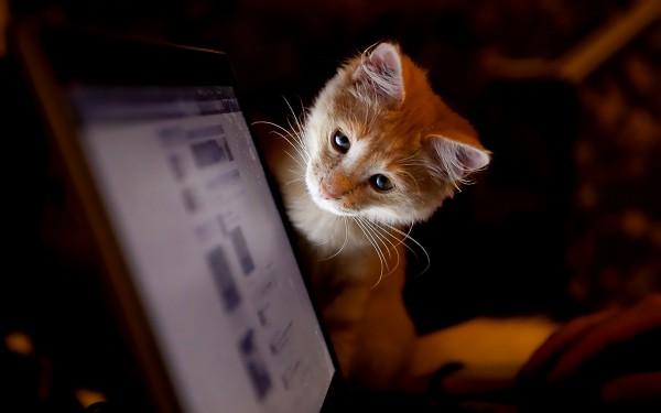 Кот смотрит в монитор