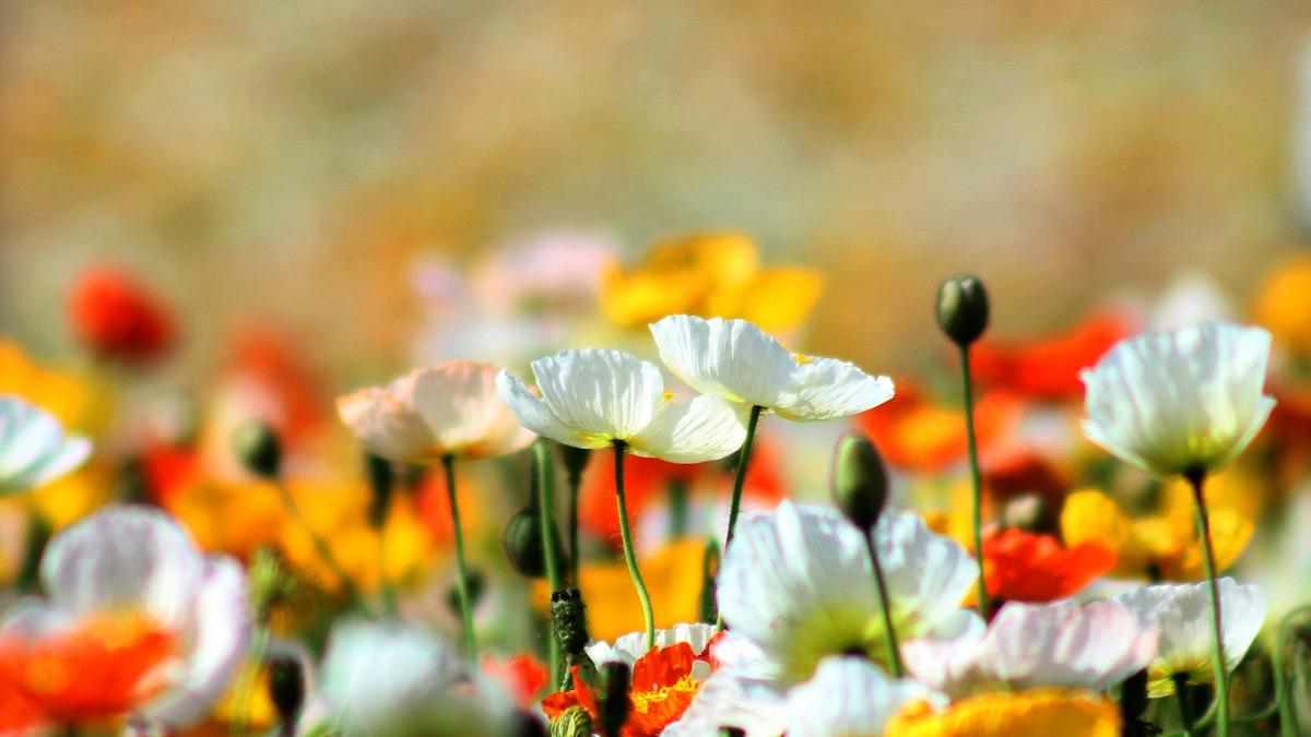 вам нравиться лето солнце белого цвета