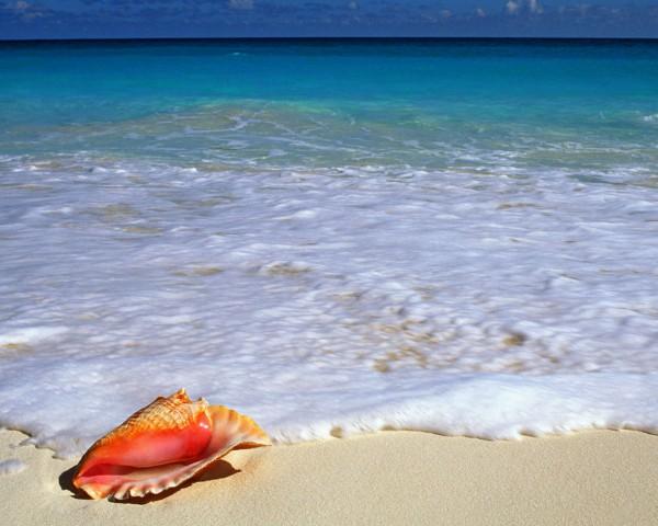 Ракушка и море