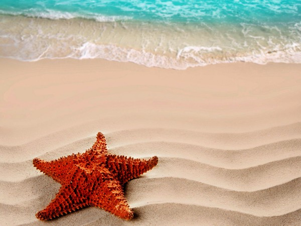 Морская звезда на песке