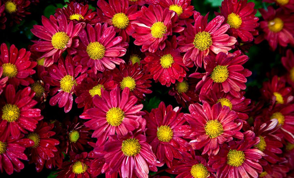 Летние обои цветы