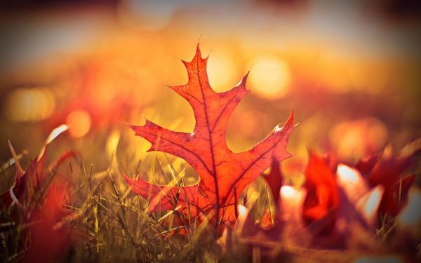 Осенние обои. Листья
