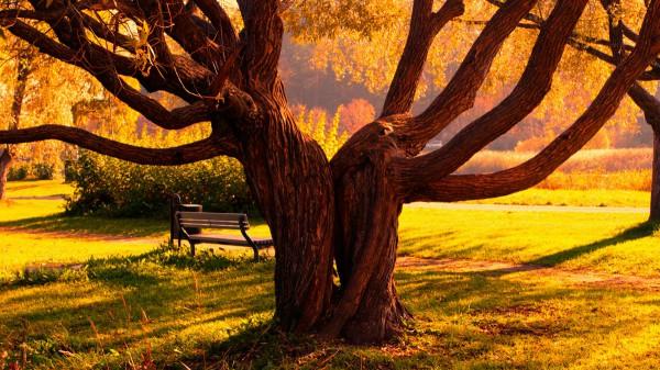 Скамья за деревом
