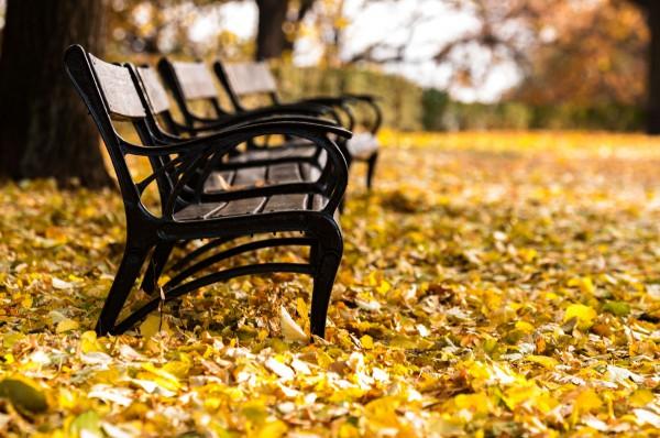Скамья на желтой листве