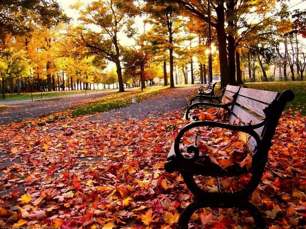 Скамья на красной листве