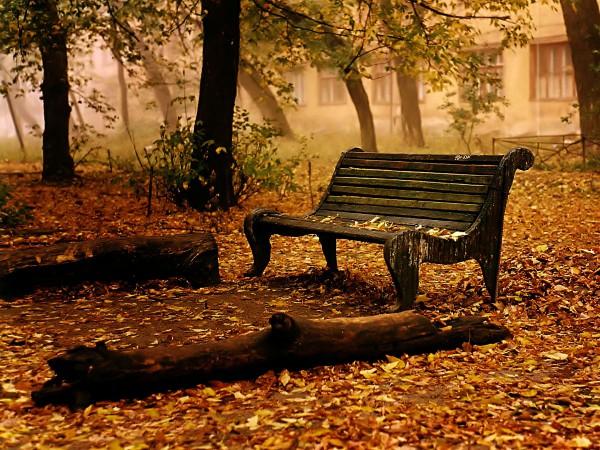 Скамья в осеннем лесу
