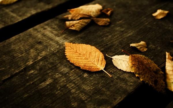Листья на скамье