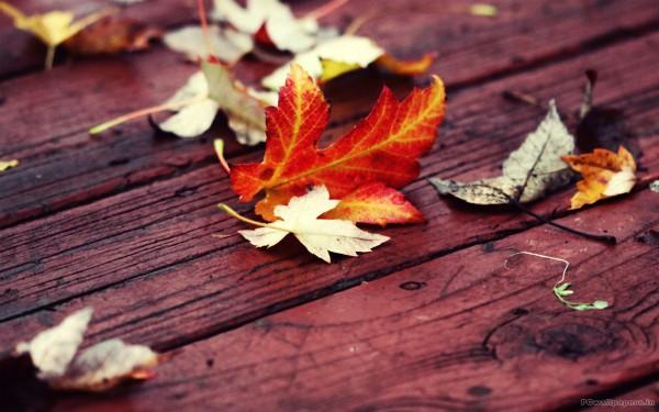 Кленовый лист на скамье