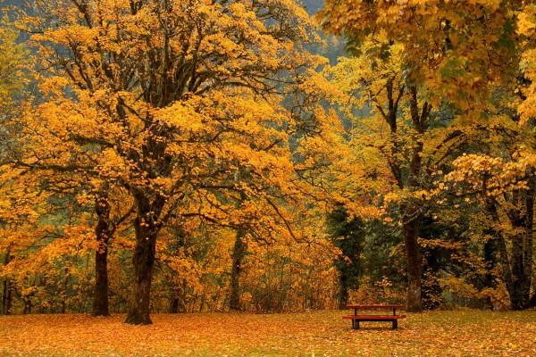 Скамья под осенними деревьями