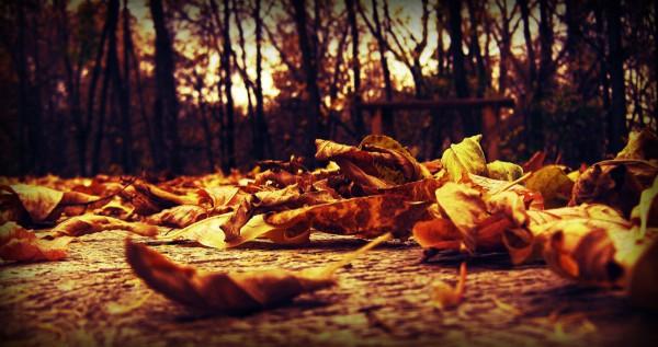 Листья на земле