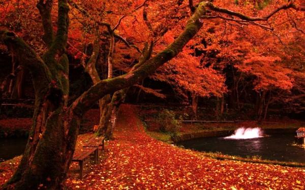 Скамья на берегу красных листьев