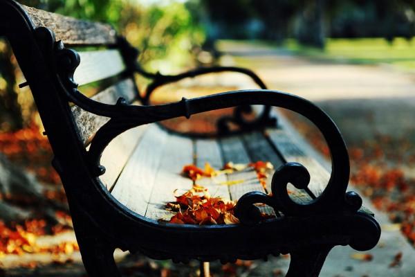 Осенний лист на скамье