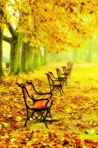 Яркий осенний парк