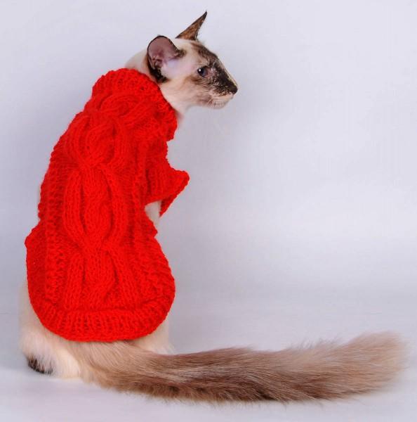 Кот в красном свитере