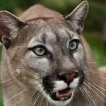 Интересные сведения о млекопитающих