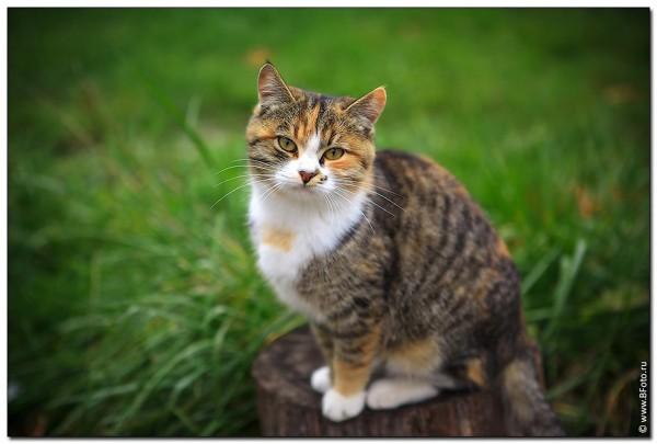 Кот на пеньке